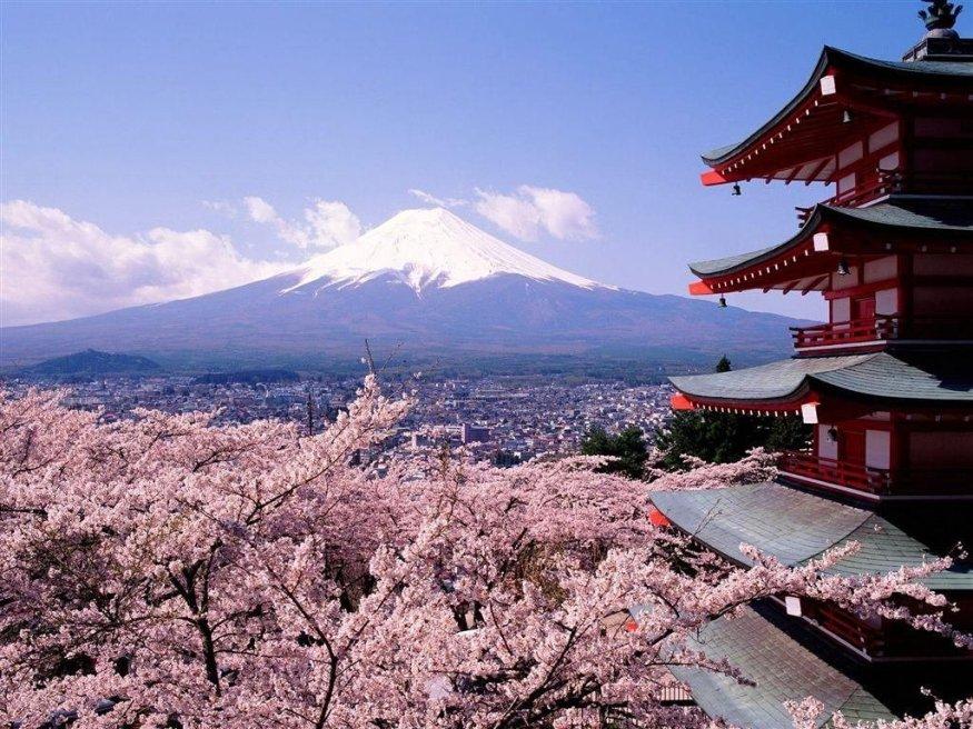 Цветение сакуры у горы Фудзияма