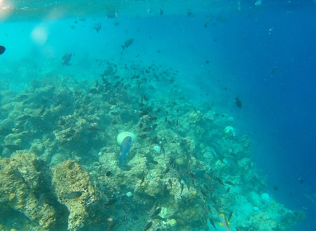 Риф в Хиккадуве