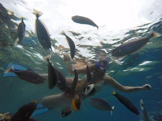 Снорклинг Маафуши рыбки