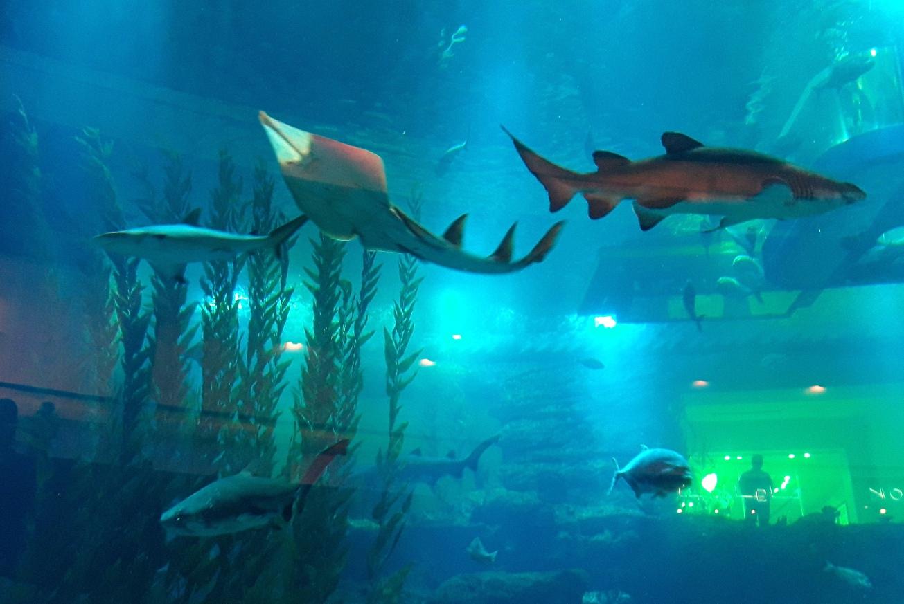 Акулы в аквариуме Дубай Мол