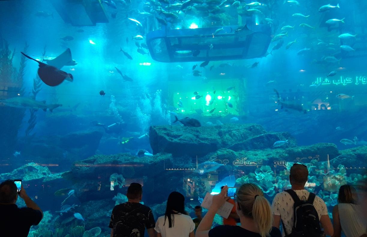 Аквариум в Дубай Мол